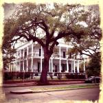 Garden District1